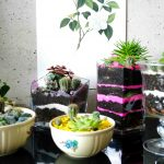 It's a terrarium world – new ideas for mini gardens